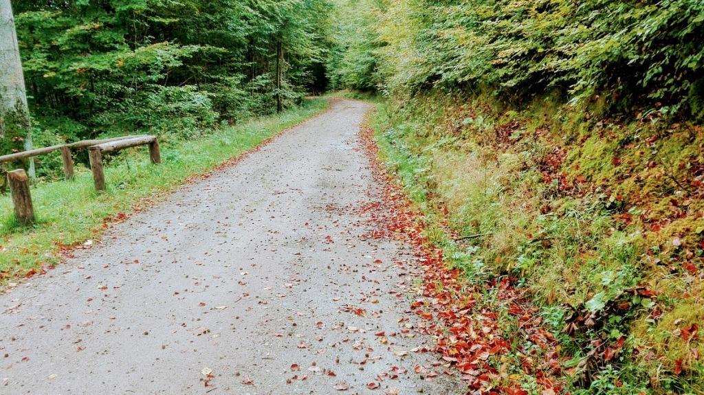 Leśne ścieżki wokół Kartuz