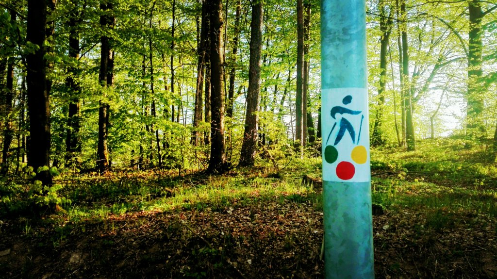Trasy Nordic Walking w Kartuzach